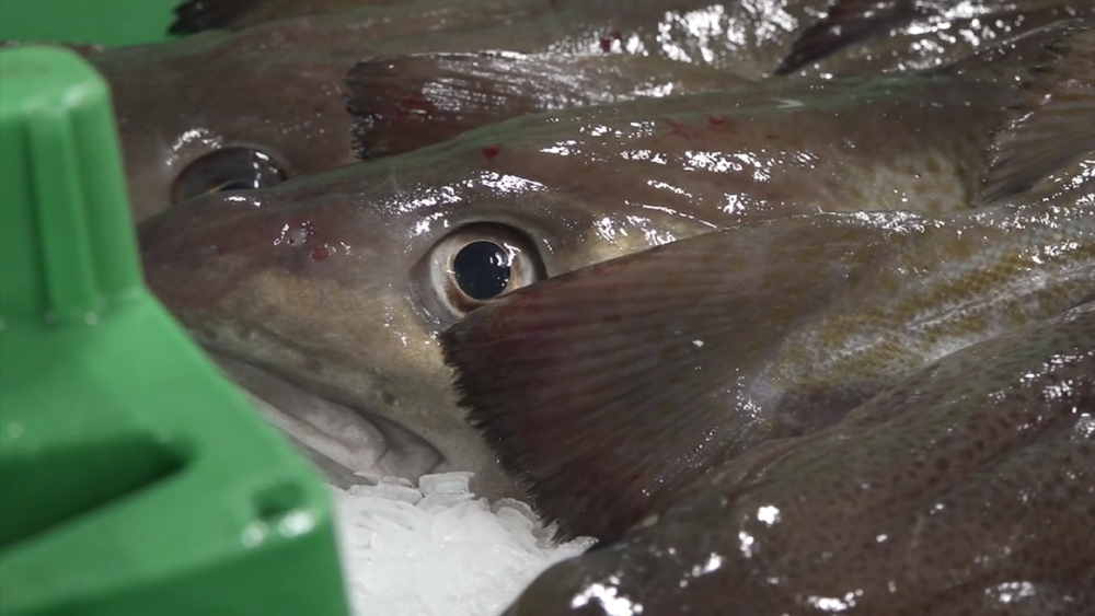 Danish fishermen call for a ban on Norwegian fish imports being sold at auctions there while their boats are excluded from Norwegian waters