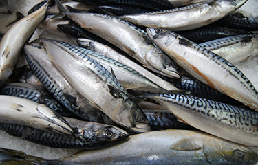 Norwegian pelagic exports 2020