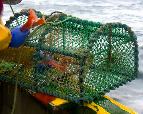 "The Scottish Creel Fishermen's Federation (SCFF) successful in Judicial Review against Marine Scotland ""right to trawl"" in High Court action"