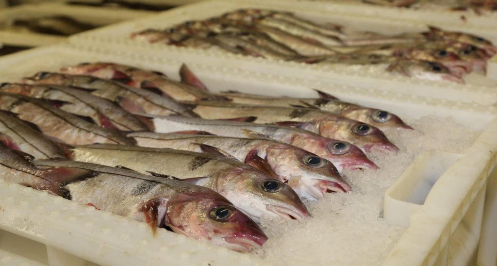 Haddock populations in the Northeast Atlantic show large genetic variations