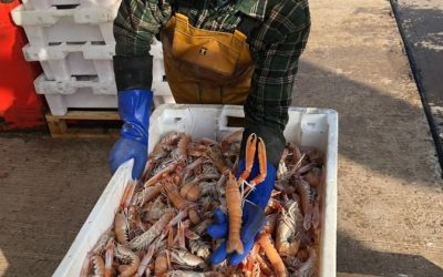 New financial support for UK seafood businesses that export to the EU