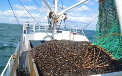 Fishing in the Limfjord is sustainable claims Danish Fisheries Association
