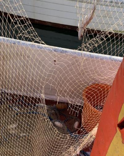 Young Torquay fisherman James Corbett's nets damaged by seal predation
