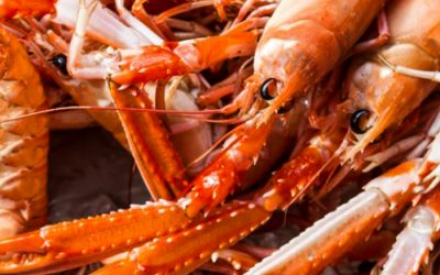 Priorities for UK Seafood Task Force laid out by Scottish Fisheries Minister