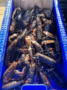 Baron Shellfish Ltd, a lobster exporter based in Bridlington has been forced into closure due to Brexit red-tape
