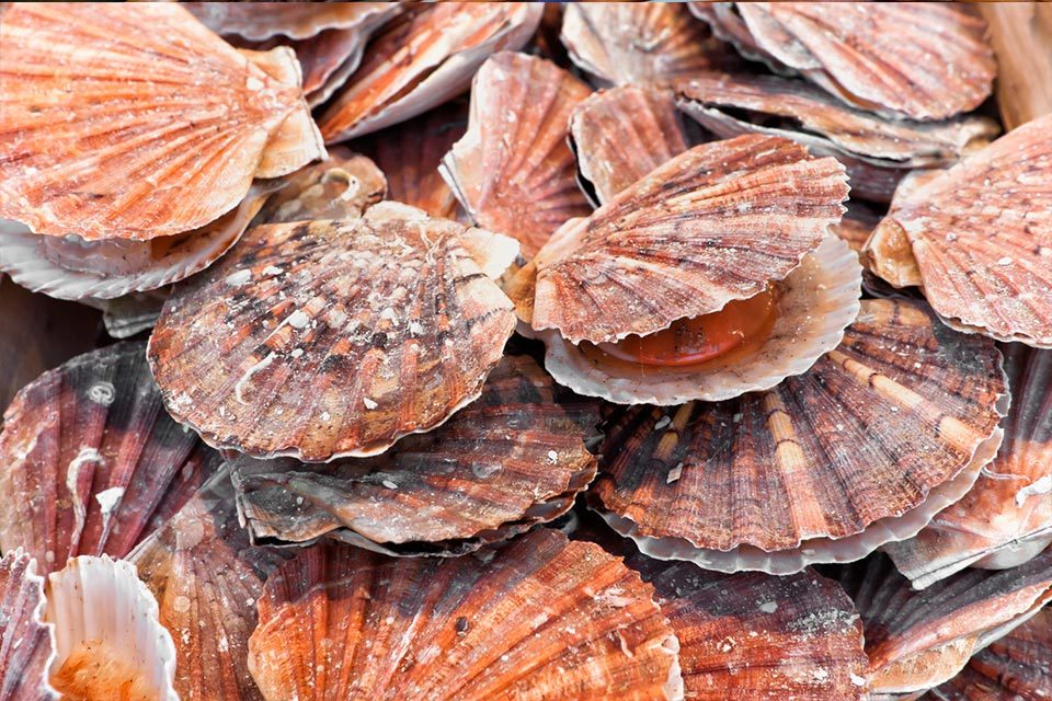 The MMO has announced that scallop fishing in UK waters of the North Sea around Dogger Bank will now be suspended until 4 April 2021