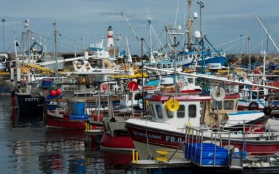 UK Government ignoring growing crisis in seafood industry