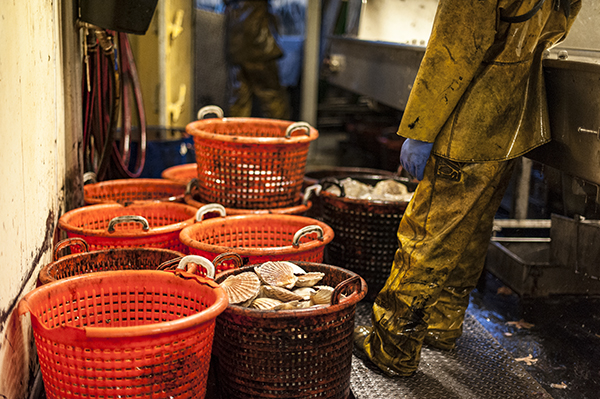 The Seafood Disruption Support Scheme is now open. Photo: Tony Fitzsimmons