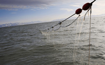 EU tuna fleets urge IOTC to close drift net fishing loopholes