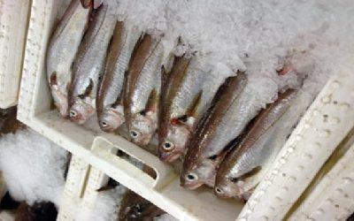 Scottish seafood taskforce meets to drive progress on export issues