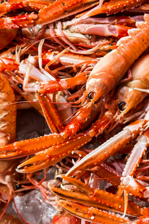 The UK Seafood Response Fund has been launched