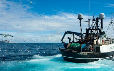 FIS announce new projects to help strengthen the Scottish seafood sector
