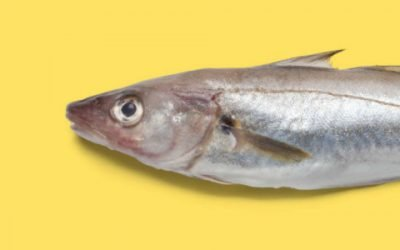 Seafish 'Love Seafood' website comes under scrutiny for errors