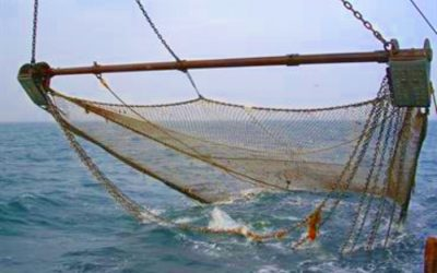 New agreement restricts coastal fishing with beam trawlers in the Skagerrak