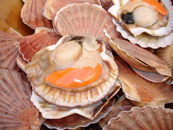 The NWWAC advises on French framework proposal for King Scallop fishery in English Channel