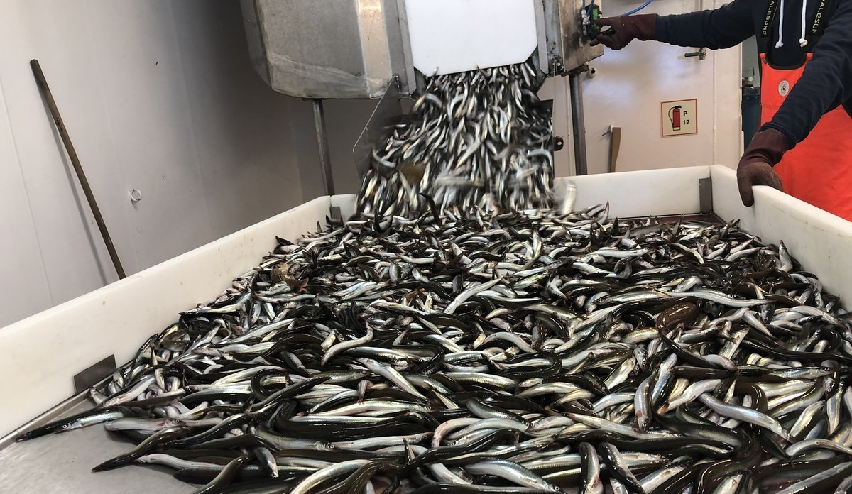 The Danish sandeel fishery for 2021 has been postponed until 15 April