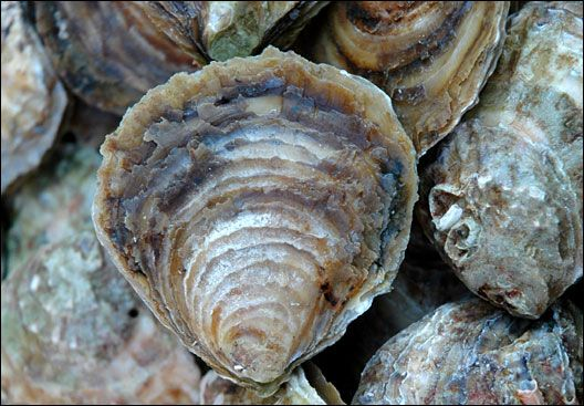 The European Union will allow the import of live bivalve molluscs from UK waters that have been recategorised Class A waters, as long as those waters meets EU standards