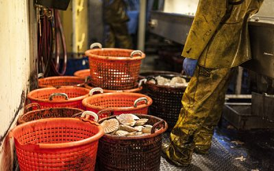 MPs urge Government to level playing field for meat and seafood exporters