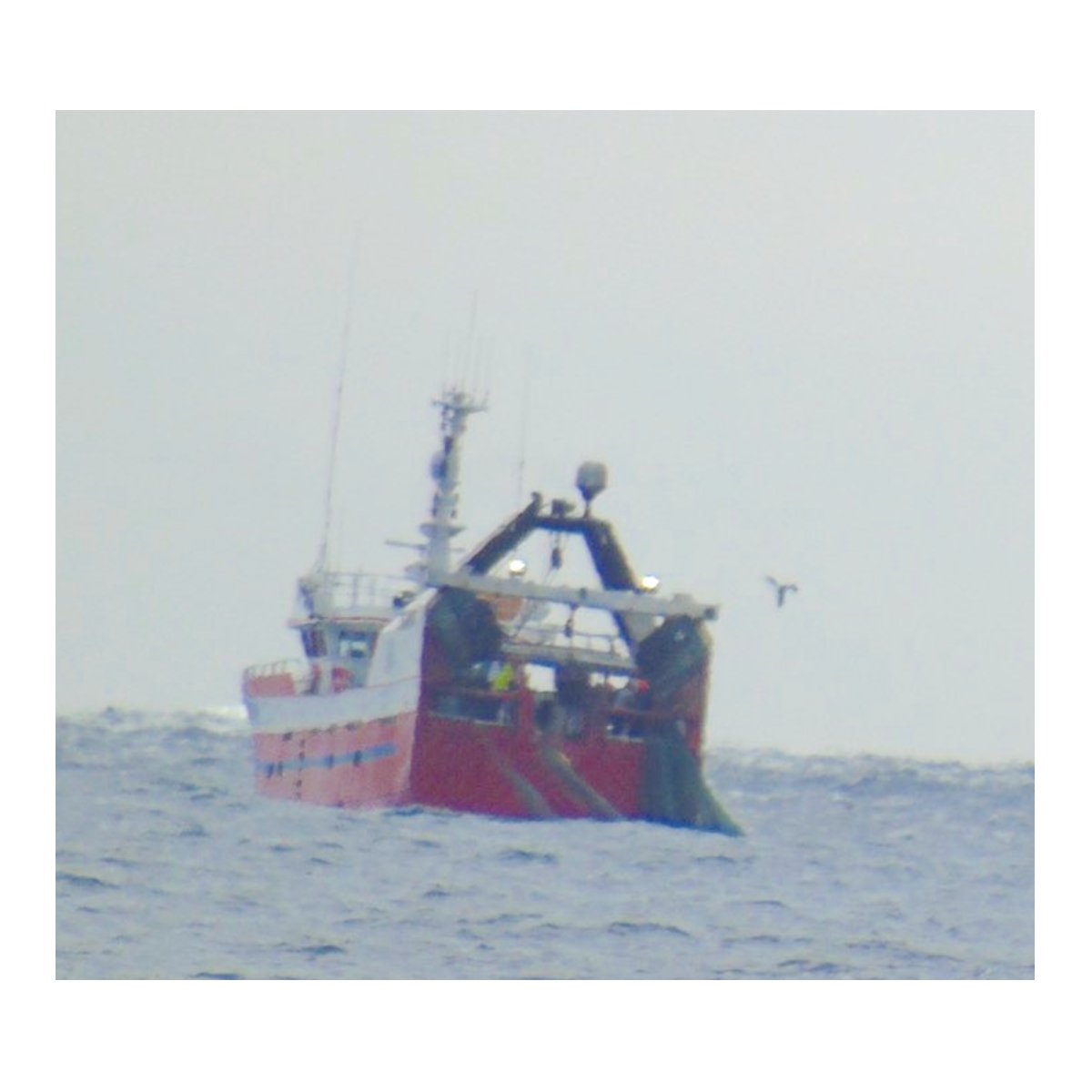 Danish Fisheries Association's Ole Lundberg Larsen claims that their members have not been operating illegal multi-rig gear in Scottish waters