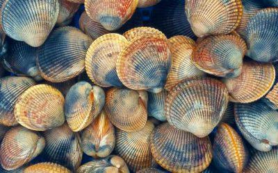EU Commission advised to reconsider ban on UK Live Bivalve Molluscs