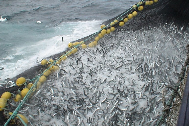 Norway has allocated their fleet a mackerel quota of over 298,000 tonnes for 2021