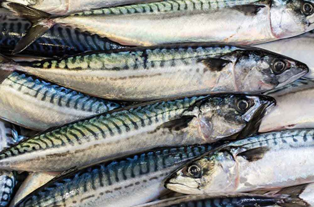 The Norwegian Pelagic Association has set out its demands on mackerel fishing for 2021 to the asked their Ministry for Fisheries