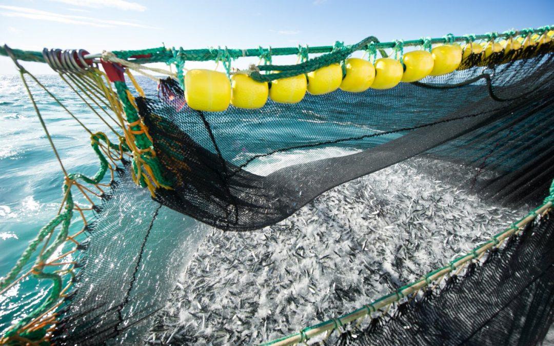 Norwegian Pelagic Association wants deep-sea-fleet to fish mackerel in fjords