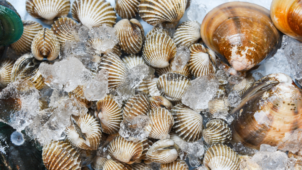 The UK Seafood Innovation Fund continues to support the future of the seafood industry in Great Britain