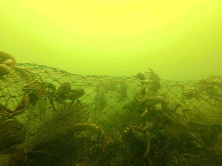 A new ghost net reporting tool has been unveiled by the Limfjord Council in Denmark to help clean-up the marine environment in the area