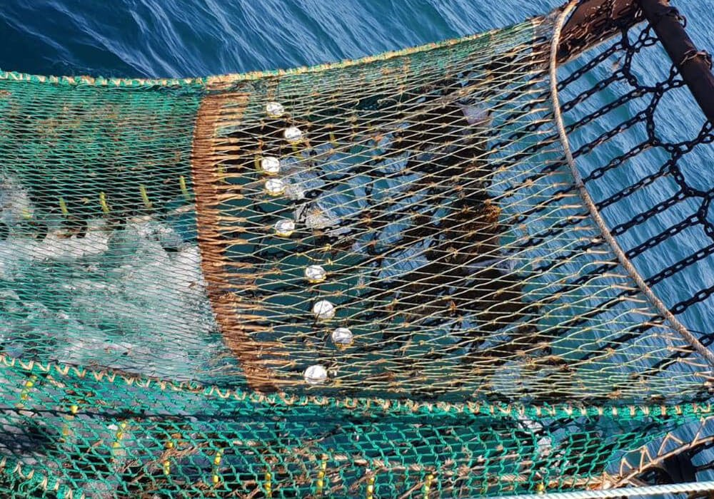 https://sntech.co.uk/blog/asl-ms-youngs-and-sntech-partner-up-to-support-british-fishermen-to-push-the-ne-scottish-mixed-demersal-fishery-towards-bycatch-reduction-and-msc-certification/
