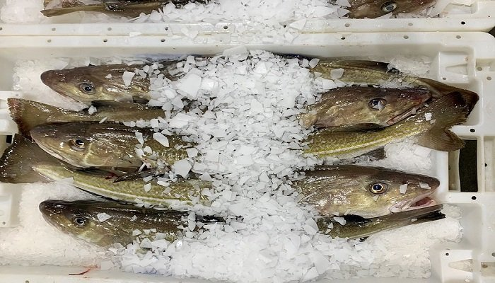 The Scottish Fishermen's Federation say they are dismayed with the ICES advice which calls for a 10% cut in North Sea Cod for 2022