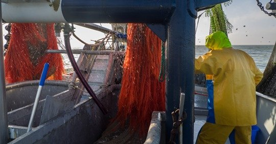 Dutch fishing and MEPs warn that the vote on the Biodiversity Strategy 2030 in could see the end of traditional trawling methods in EU waters