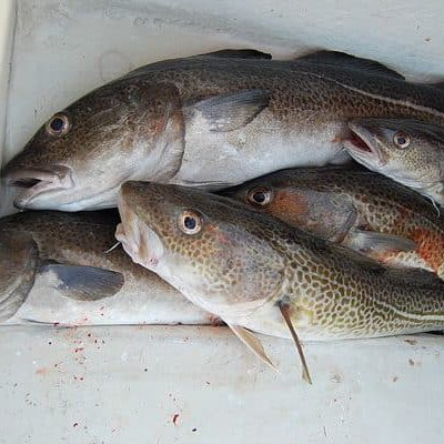 The ICES has released the advice for fishing opportunities in the Baltic Sea for 2022 with no Eastern Baltic Cod Quota