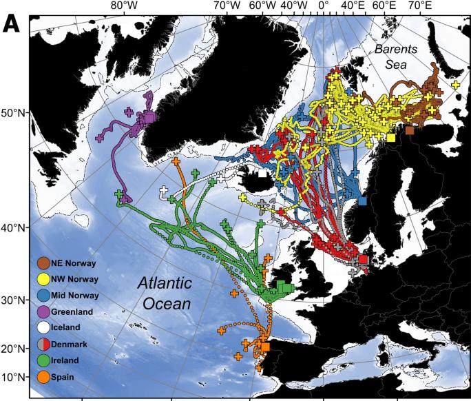 migration route atlantic salmon