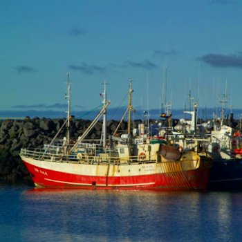 Iceland will now electronically allocate tariff quotas in a move which is set to modernise the fishing industry there