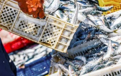 Overfishing rate back on the rise after a decade of recovery claims Oceana