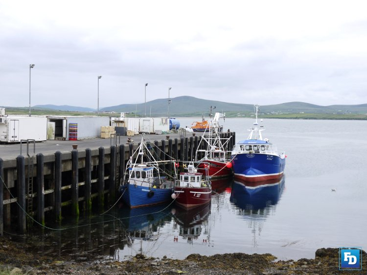 Quota and quota management concerns for under 15m hook and line mackerel fishery