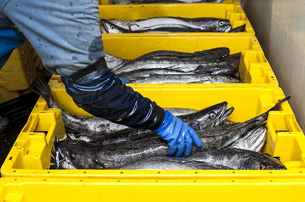 International Scientific Study Evidence the Growth of The Worldwide Biomass of Demersal fish species such as Megrim, Hake And Sole