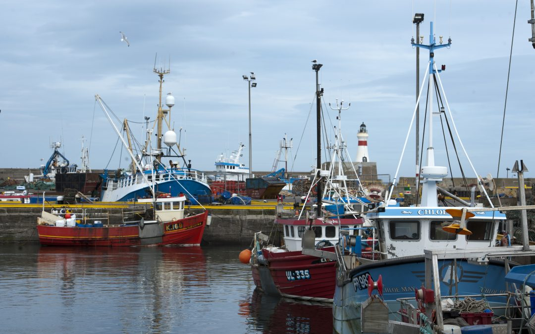 Seafish survey shows profit and turnover down for UK Fishing fleet in 2020