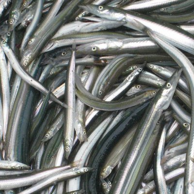 Scottish Rural Secretary Mairi Gougeon has promised to investigate ways to stop sandeel fishing by Danish and Swedish in Scottish waters