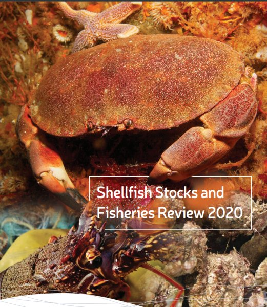 Click on the photo to read more on the Irish Shellfish Stock and Fisheries Review 2020