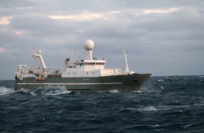 mackerel east coast iceland