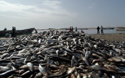 The European Union and Mauritania announce a new fisheries agreement