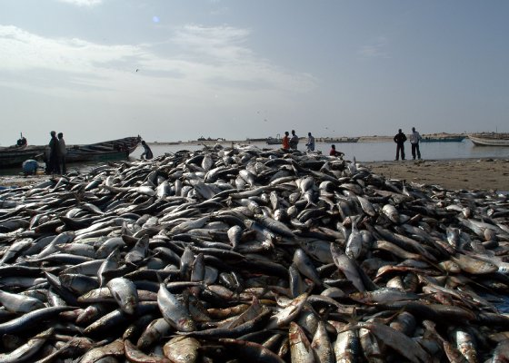The European Union and Mauritania have concluded the negotiations for the renewal of a fisheries agreement