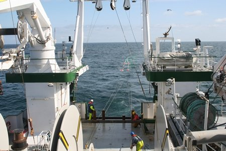 A new EU and Norwegian Research Council genetic study sheds considerable light on marine migratory behaviour of the Atlantic salmon