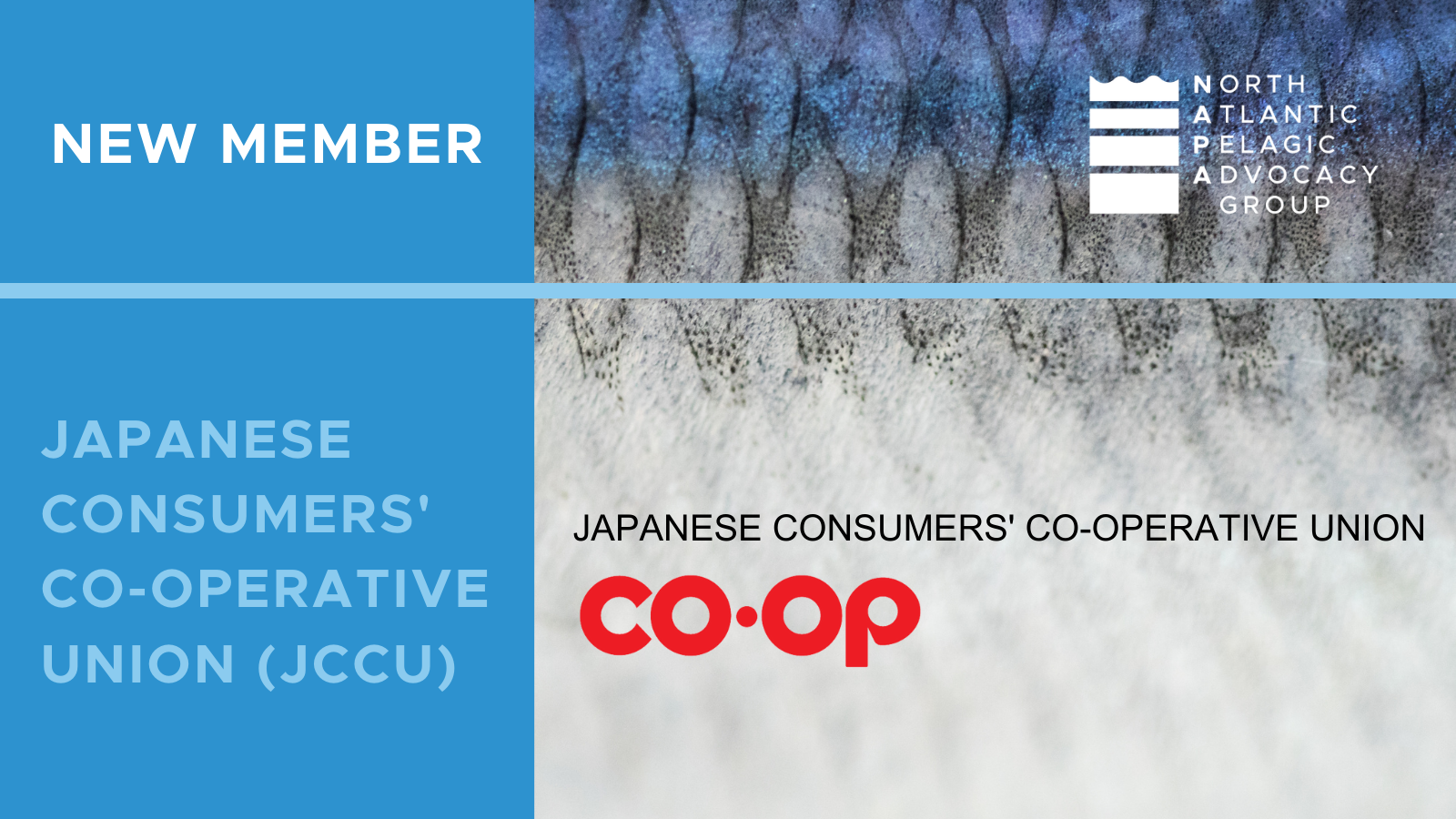 The North Atlantic Pelagic Advocacy Group (NAPA) has announced its first member from Asia, the Japanese Consumers' Co-operative Union (JCCU)