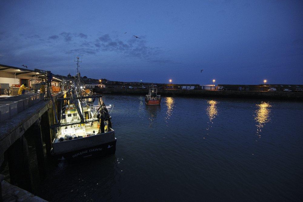 msc digital fisheries