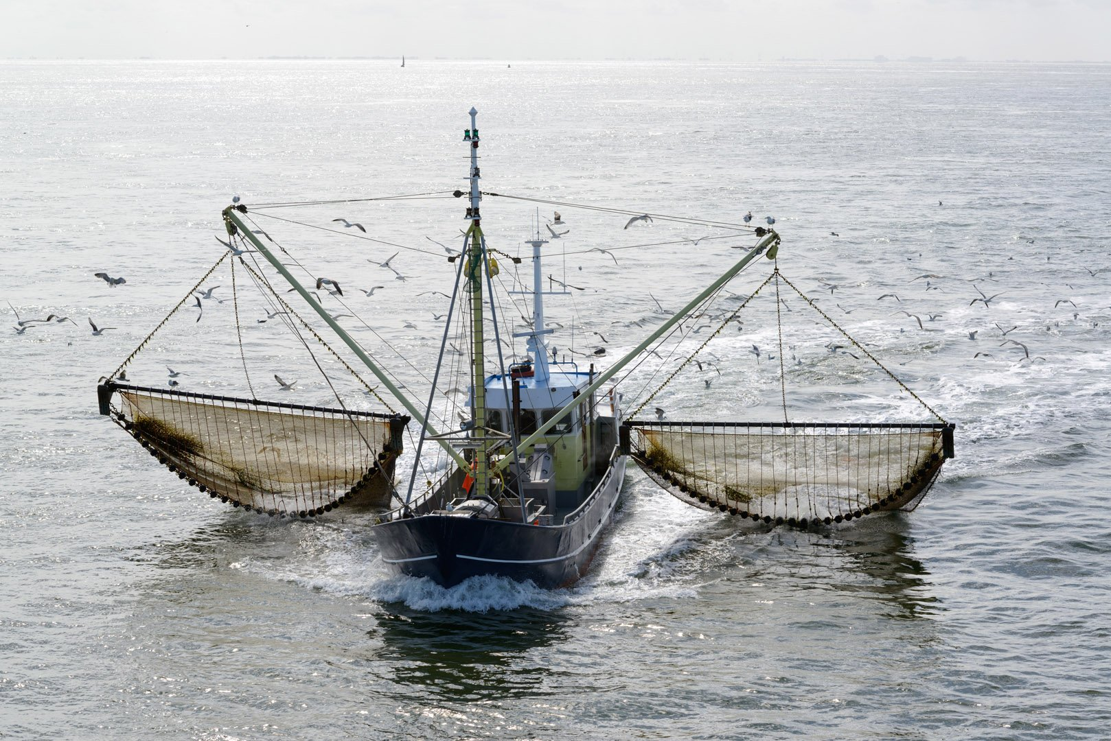 Full ban on electric fishing: one cataclysm averted, but more on their way warns Parisian based NGO, BLOOM