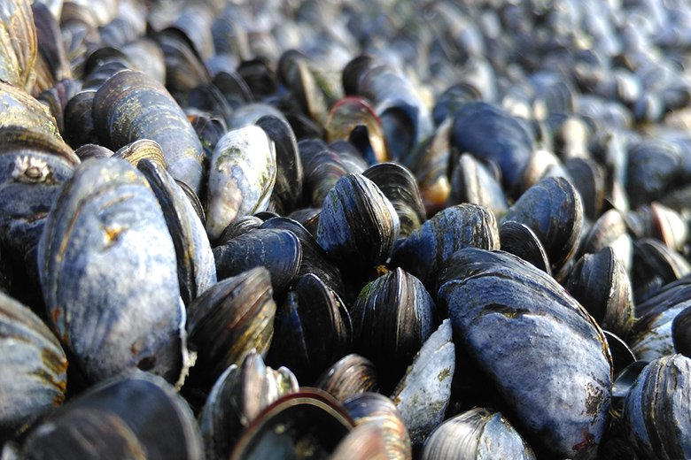 The FSAI, in conjunction with, the SFPA, the HSE and the Marine Institute have issued a Shellfish Warning for the Castlemaine Production Area
