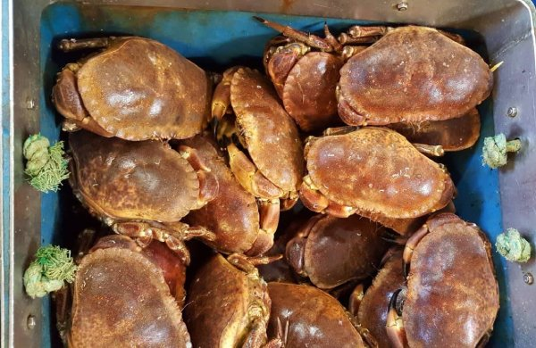 A study which examines the impact of COVID-19 on the Brown Crab supply chain has been released by EUMOFA